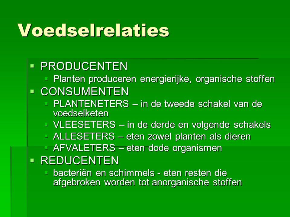 Voedselrelaties  PRODUCENTEN  Planten produceren energierijke, organische stoffen  CONSUMENTEN  PLANTENETERS – in de tweede schakel van de voedsel