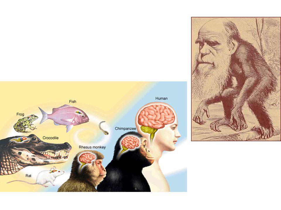 Zingeving en wetenschap Wittgenstein 1 – Waarover men niet spreken kan, moet men zwijgen Wittgenstein 2 – Meaning is use – Verschillende taalspelen – Tegen de wetenschappelijke pretenties van de religie – Tegen de zingevende pretenties van de wetenschap