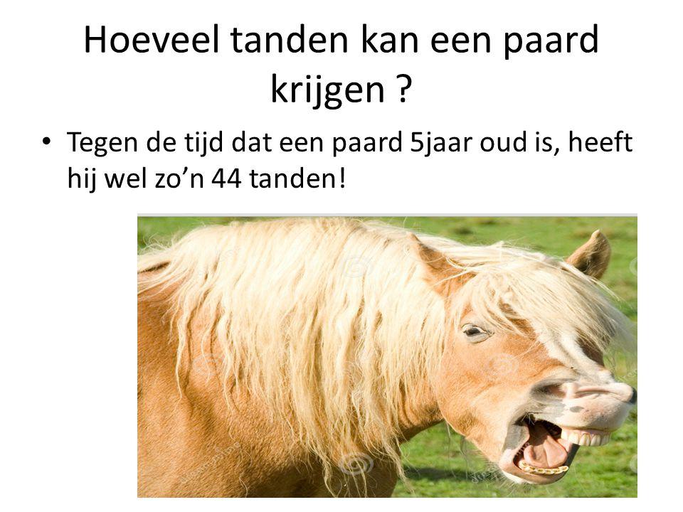Hoeveel tanden kan een paard krijgen ? Tegen de tijd dat een paard 5jaar oud is, heeft hij wel zo'n 44 tanden!
