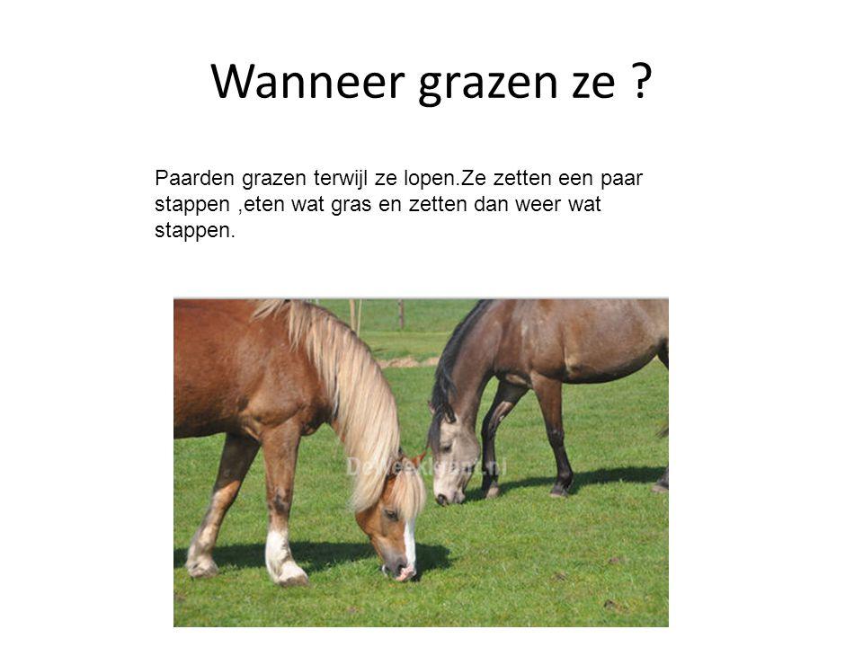 Wanneer grazen ze ? Paarden grazen terwijl ze lopen.Ze zetten een paar stappen,eten wat gras en zetten dan weer wat stappen.