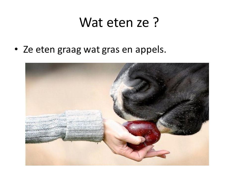 Wat eten ze ? Ze eten graag wat gras en appels.