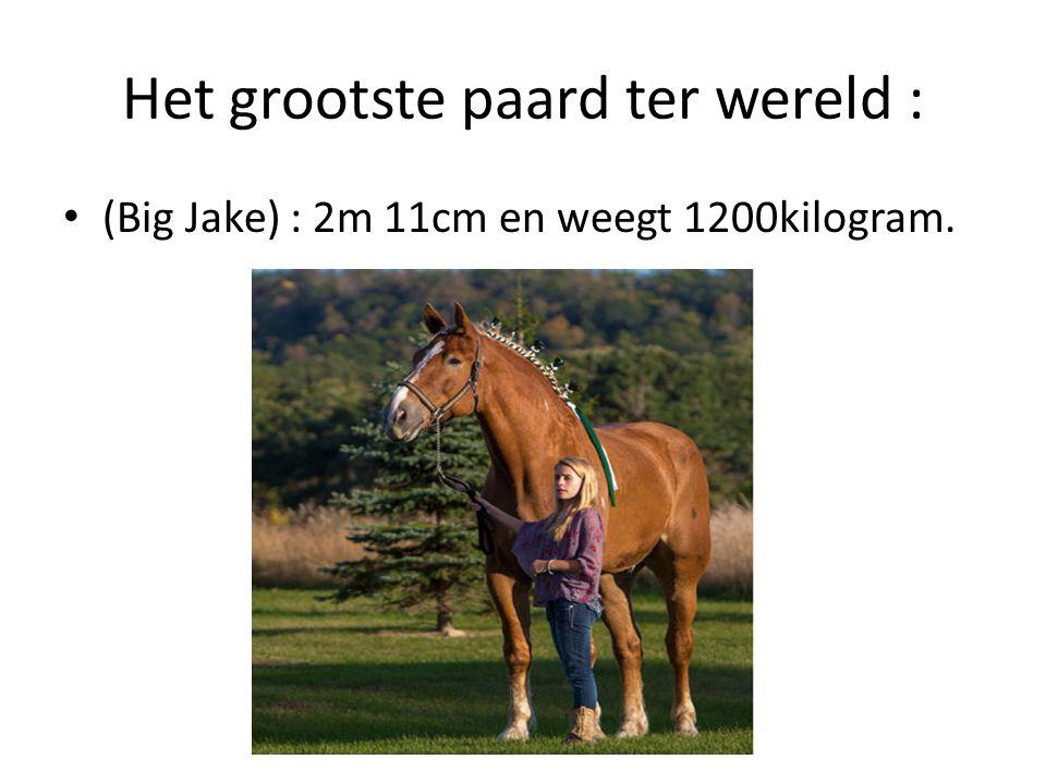 Het grootste paard ter wereld : (Big Jake) : 2m 11cm en weegt 1200kilogram.