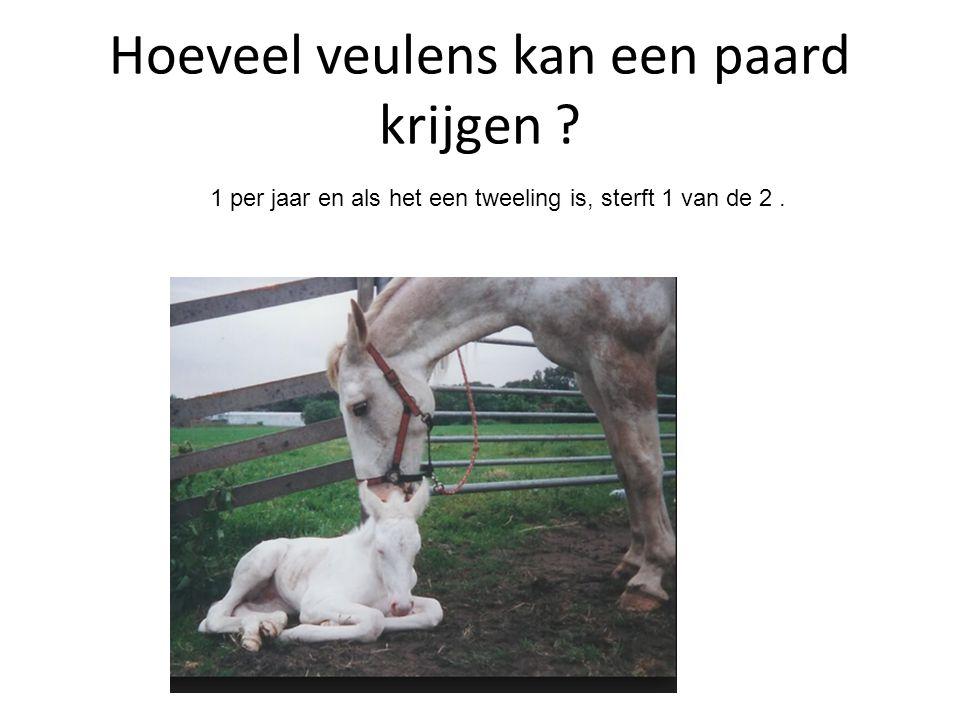 Hoeveel veulens kan een paard krijgen ? 1 per jaar en als het een tweeling is, sterft 1 van de 2.
