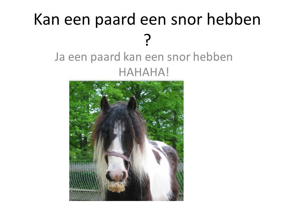 Kan een paard een snor hebben ? Ja een paard kan een snor hebben HAHAHA!