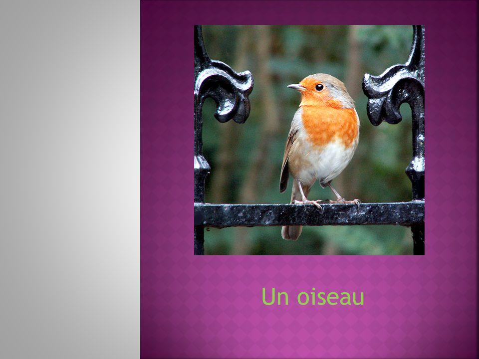 Un oiseau