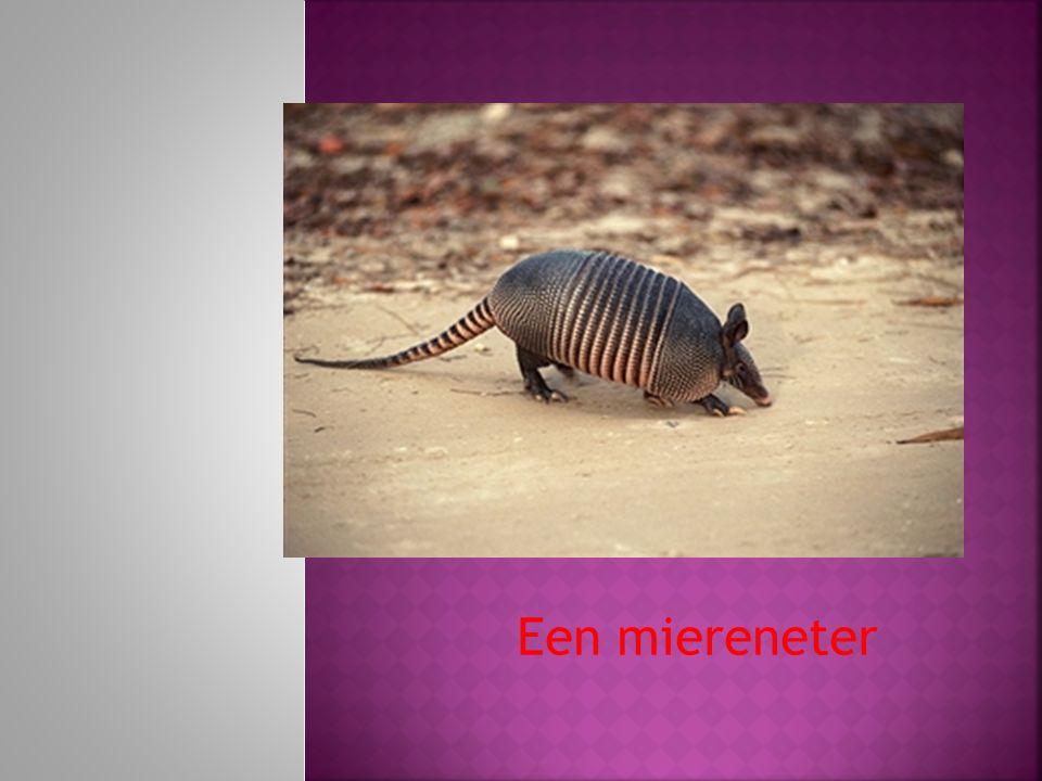 Een miereneter