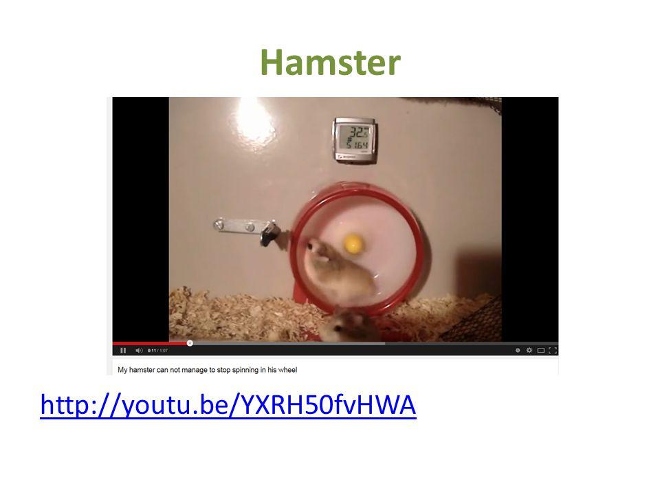 Hamster http://youtu.be/YXRH50fvHWA