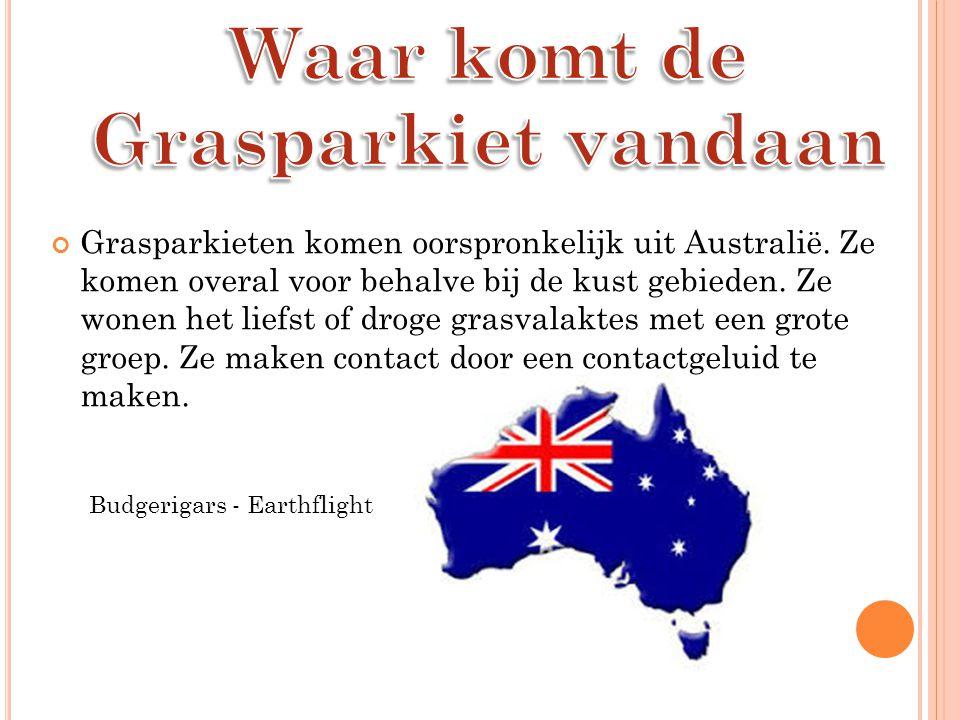 Grasparkieten komen oorspronkelijk uit Australië.