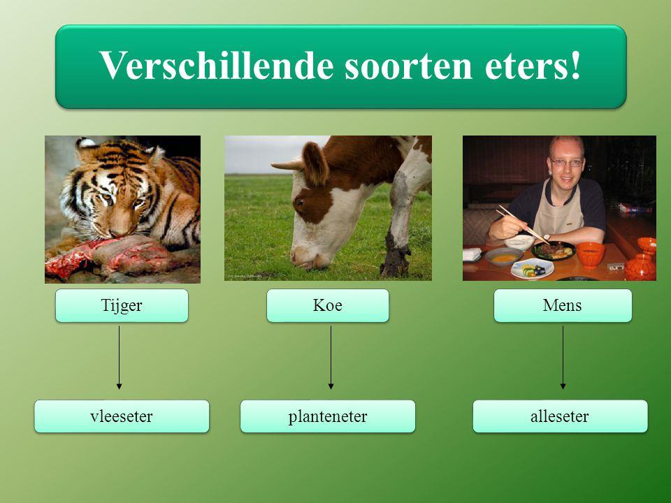 Verschillende soorten eters! TijgerKoeMensvleeseterplanteneteralleseter