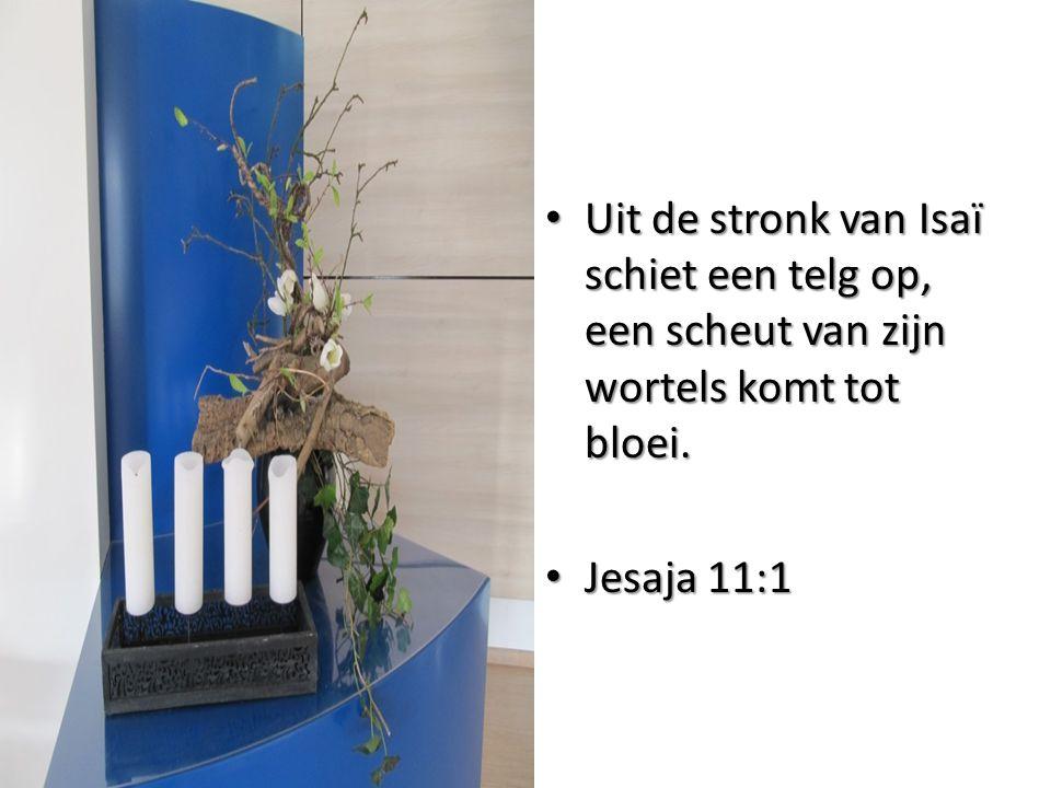 Uit de stronk van Isaï schiet een telg op, een scheut van zijn wortels komt tot bloei. Uit de stronk van Isaï schiet een telg op, een scheut van zijn