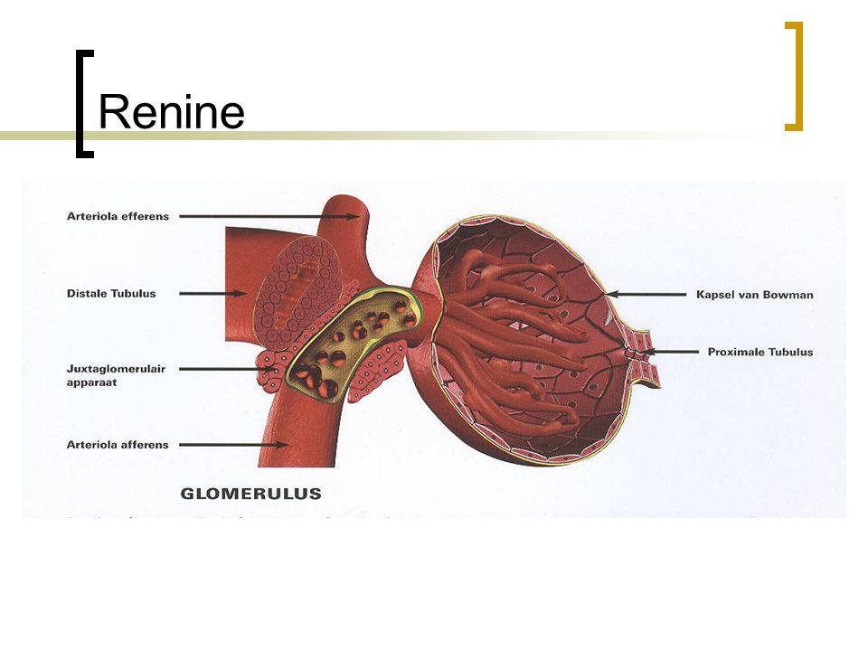 Renine Is een hormoon dat geproduceerd wordt in de nieren. Wordt afgegeven als de nierdoor- bloeding afneemt.