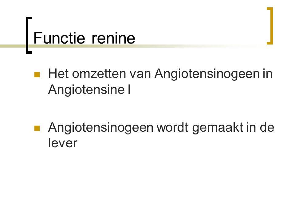 Functie renine Het omzetten van Angiotensinogeen in Angiotensine I Angiotensinogeen wordt gemaakt in de lever