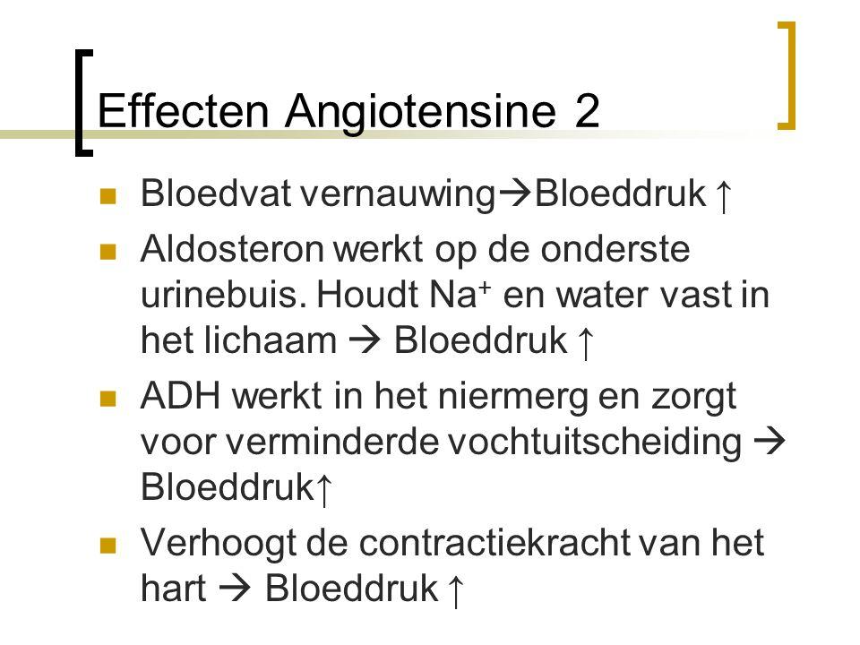 Effecten Angiotensine 2 Bloedvat vernauwing  Bloeddruk ↑ Aldosteron werkt op de onderste urinebuis. Houdt Na + en water vast in het lichaam  Bloeddr