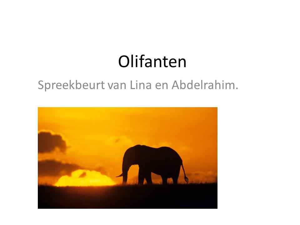 Olifanten Spreekbeurt van Lina en Abdelrahim.