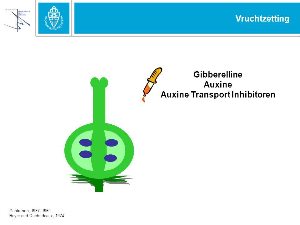 Gibberelline Auxine Auxine Transport Inhibitoren Vruchtzetting Gustafson, 1937; 1960 Beyer and Quebedeaux, 1974