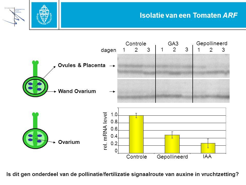 Isolatie van een Tomaten ARF 1 2 3 ControleGA3 Gepollineerd Ovules & Placenta Wand Ovarium dagen ControleGepollineerd IAA 1.0 0.8 0.6 0.4 0.2 0 rel.