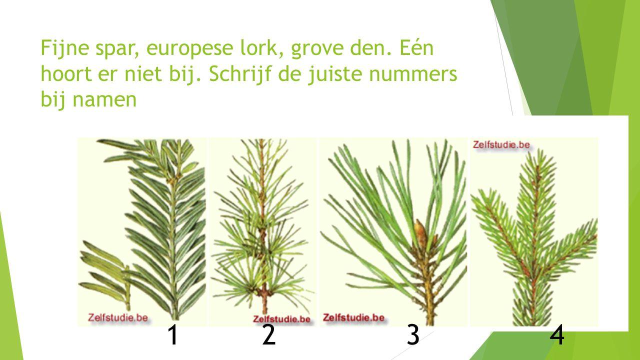 Fijne spar, europese lork, grove den. Eén hoort er niet bij. Schrijf de juiste nummers bij namen 12341234