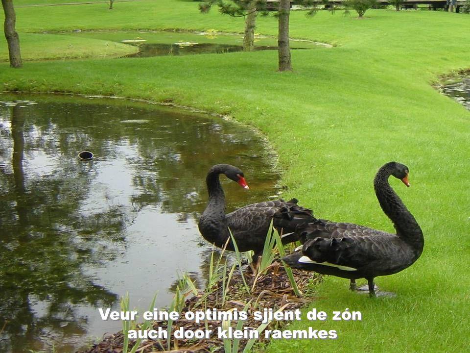 Veur eine optimis sjient de zón auch door klein raemkes Veur eine optimis sjient de zón auch door klein raemkes