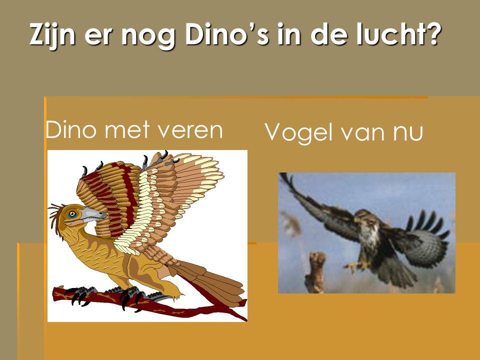 Zijn er nog Dino's in de lucht? Dino met veren Vogel van nu