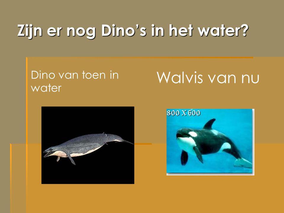 Zijn er nog Dino's in het water? Dino van toen in water Walvis van nu