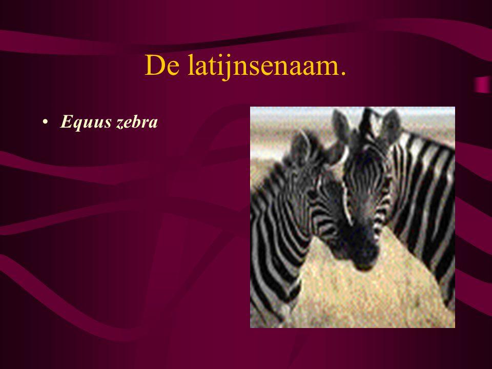 De latijnsenaam. Equus zebra