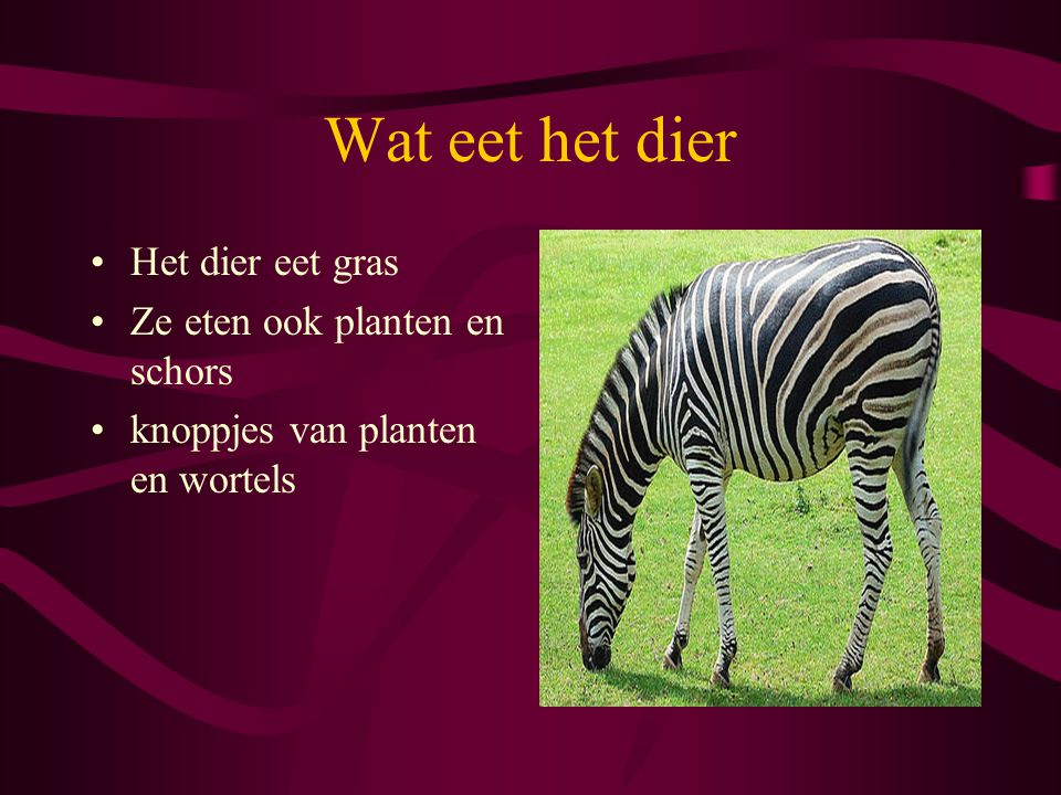 Wat eet het dier Het dier eet gras Ze eten ook planten en schors knoppjes van planten en wortels