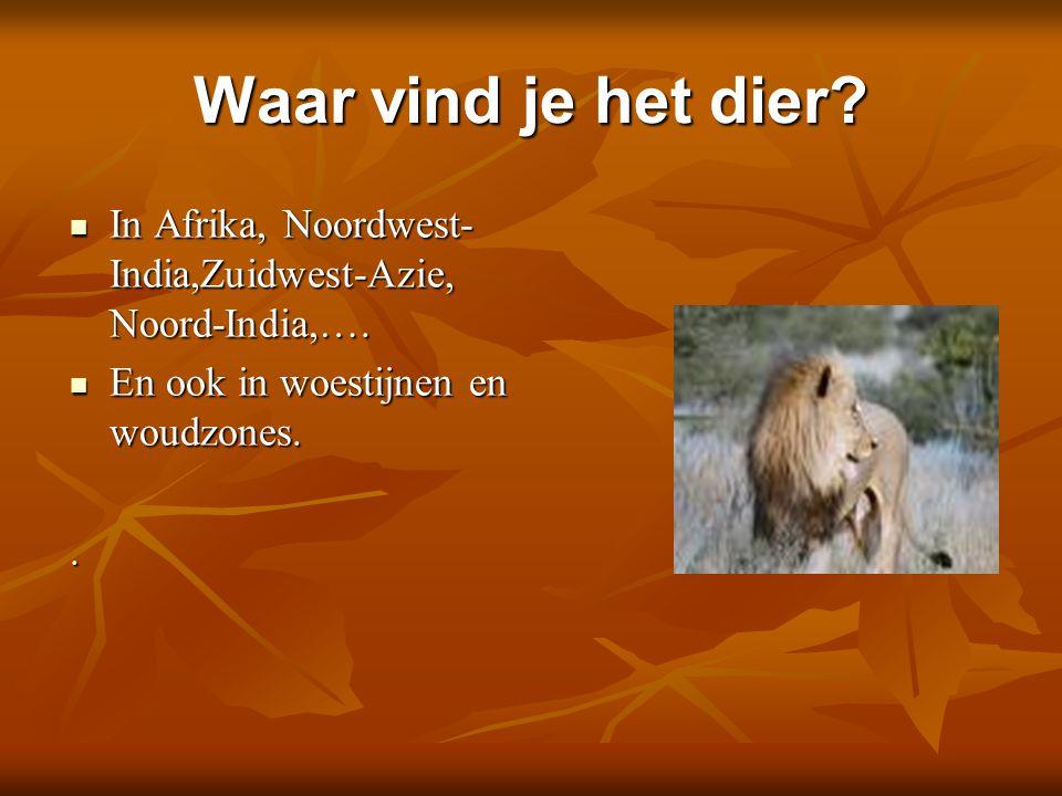 Waar vind je het dier? In Afrika, Noordwest- India,Zuidwest-Azie, Noord-India,…. In Afrika, Noordwest- India,Zuidwest-Azie, Noord-India,…. En ook in w