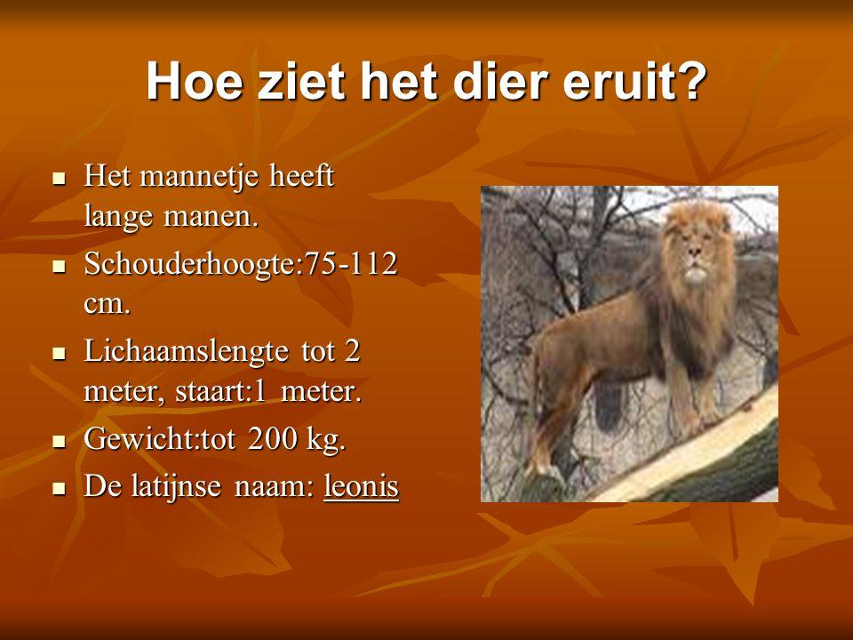 Hoe ziet het dier eruit? Het mannetje heeft lange manen. Het mannetje heeft lange manen. Schouderhoogte:75-112 cm. Schouderhoogte:75-112 cm. Lichaamsl