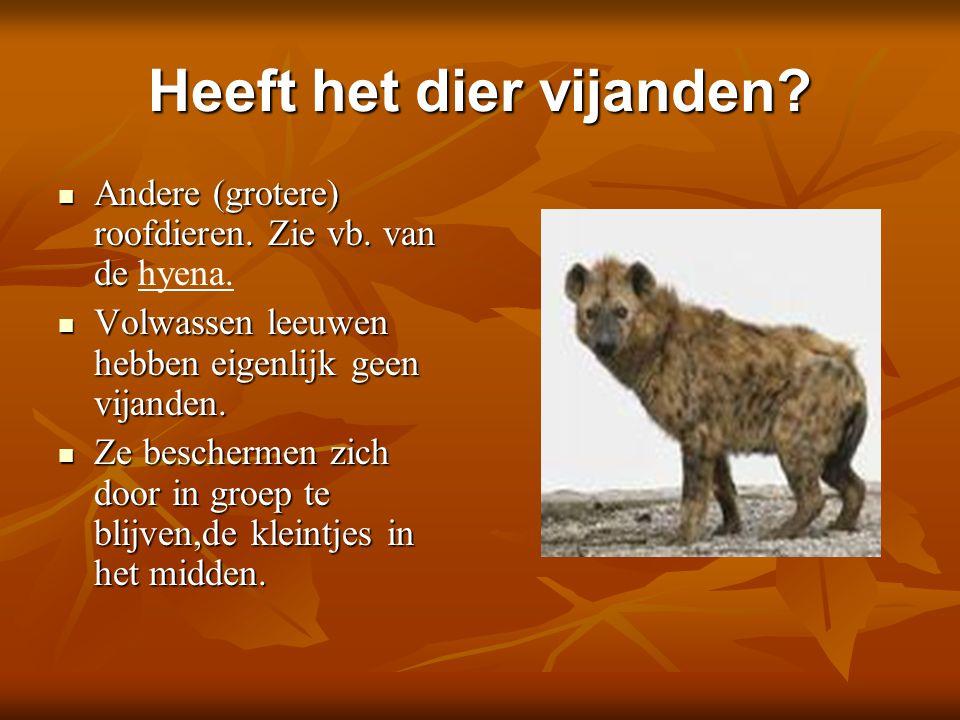 Heeft het dier vijanden? Andere (grotere) roofdieren. Zie vb. van de Andere (grotere) roofdieren. Zie vb. van de hyena. Volwassen leeuwen hebben eigen