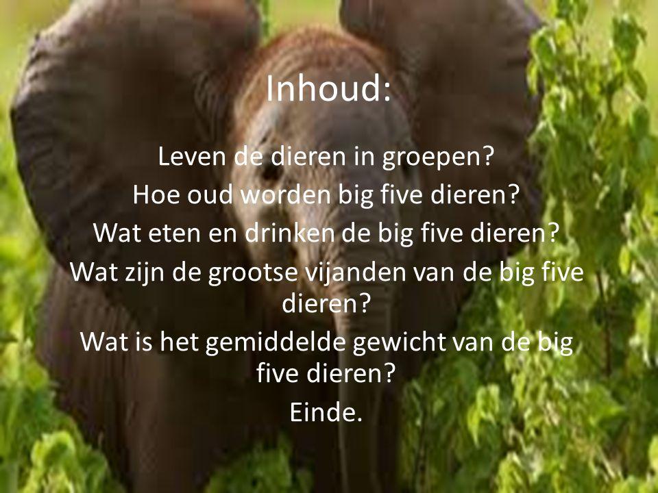 Inhoud: Leven de dieren in groepen? Hoe oud worden big five dieren? Wat eten en drinken de big five dieren? Wat zijn de grootse vijanden van de big fi