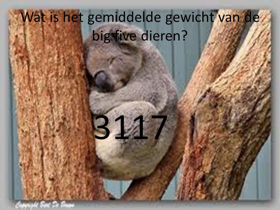 Wat is het gemiddelde gewicht van de big five dieren? 3117