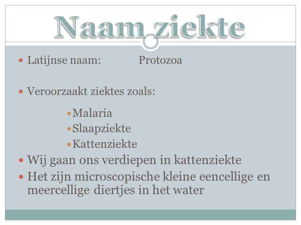 Latijnse naam:Protozoa Veroorzaakt ziektes zoals: Malaria Slaapziekte Kattenziekte Wij gaan ons verdiepen in kattenziekte Het zijn microscopische klei