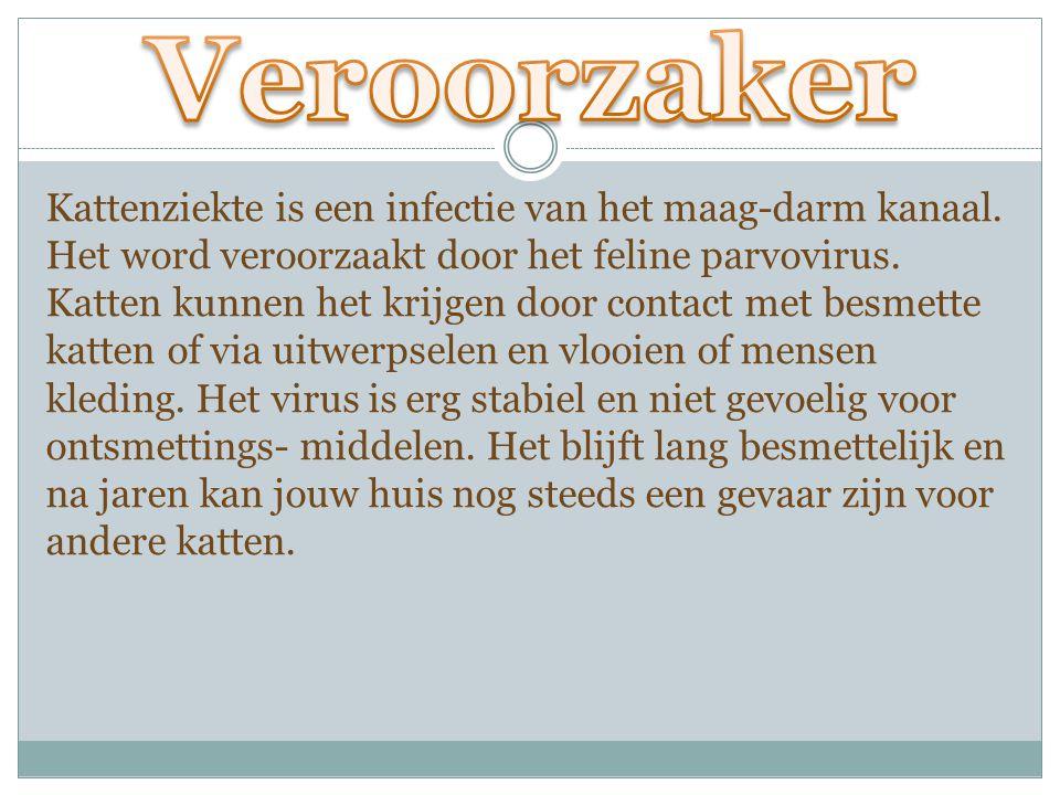 Kattenziekte is een infectie van het maag-darm kanaal. Het word veroorzaakt door het feline parvovirus. Katten kunnen het krijgen door contact met bes