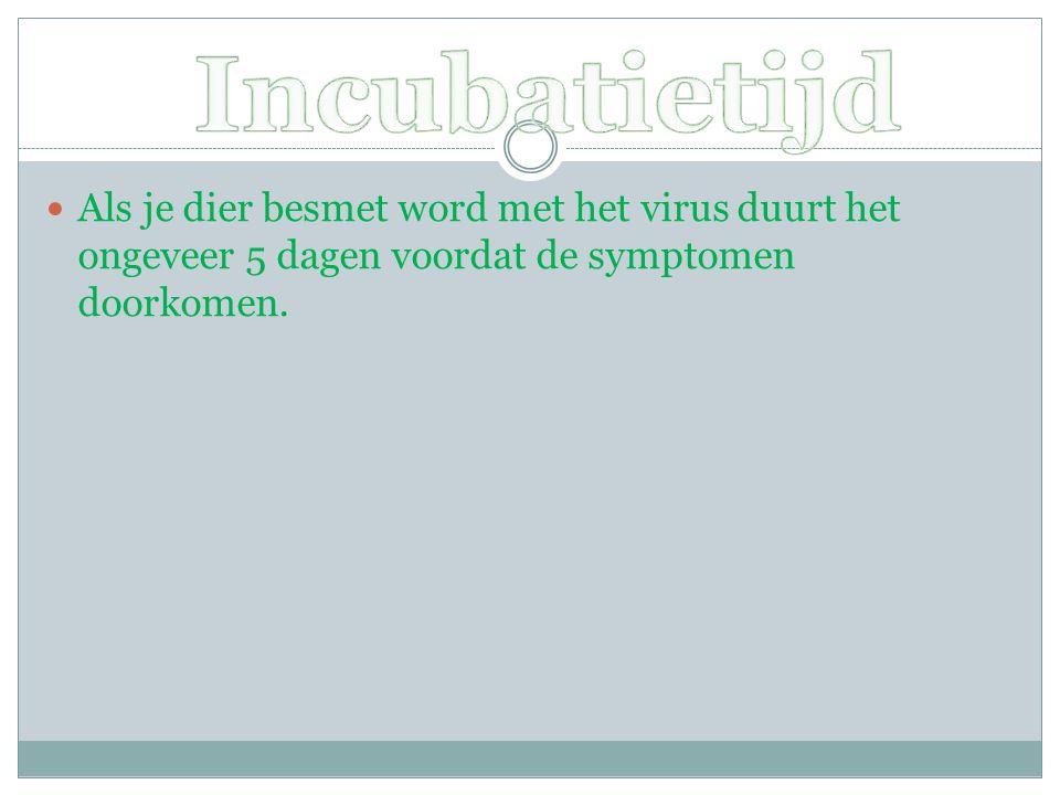 Als je dier besmet word met het virus duurt het ongeveer 5 dagen voordat de symptomen doorkomen.