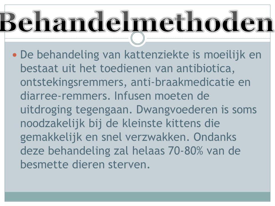 De behandeling van kattenziekte is moeilijk en bestaat uit het toedienen van antibiotica, ontstekingsremmers, anti-braakmedicatie en diarree-remmers.