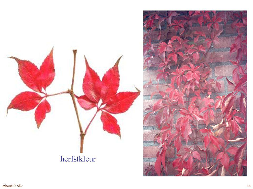 vijftallig blad Parthenocissus quinquefolia blad herfstkleur 44inhoud: 2