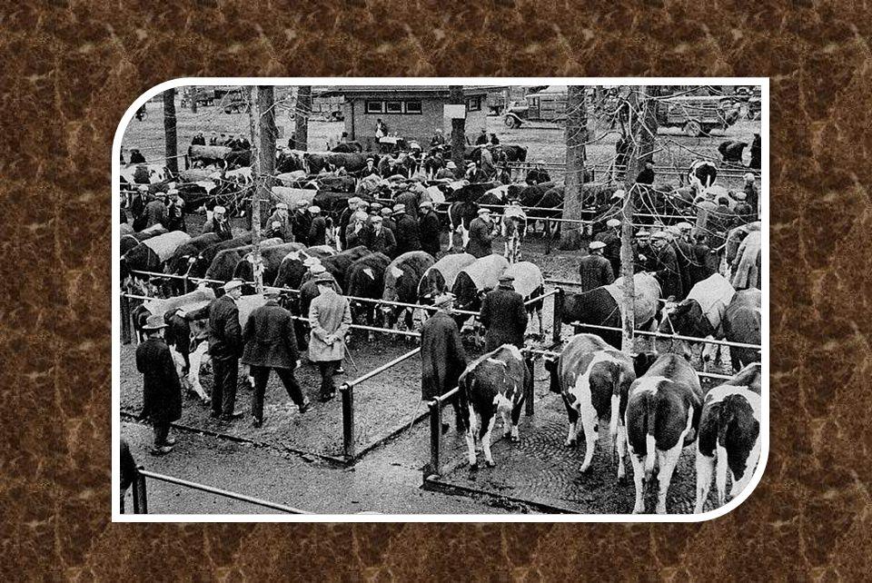 Veemarkt in 1955 - langs de Boezemweg