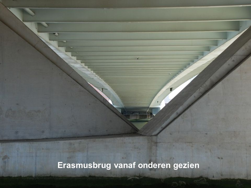 Bloemenweelde onder Erasmusbrug