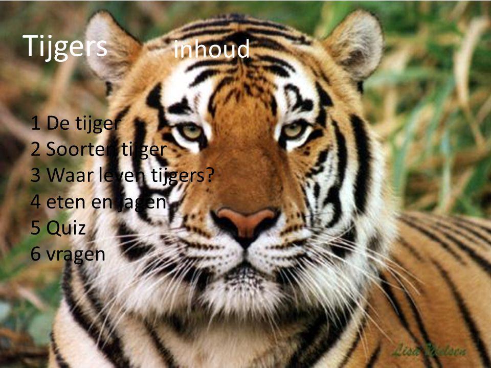 Tijgers inhoud 1 De tijger 2 Soorten tijger 3 Waar leven tijgers? 4 eten en jagen 5 Quiz 6 vragen