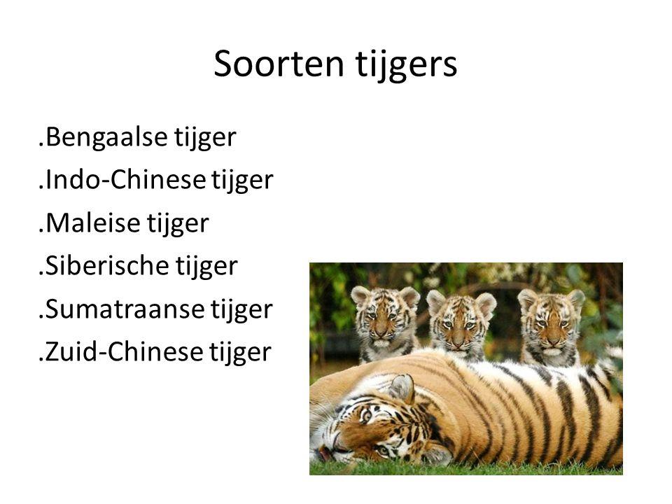 Soorten tijgers.Bengaalse tijger.Indo-Chinese tijger.Maleise tijger.Siberische tijger.Sumatraanse tijger.Zuid-Chinese tijger