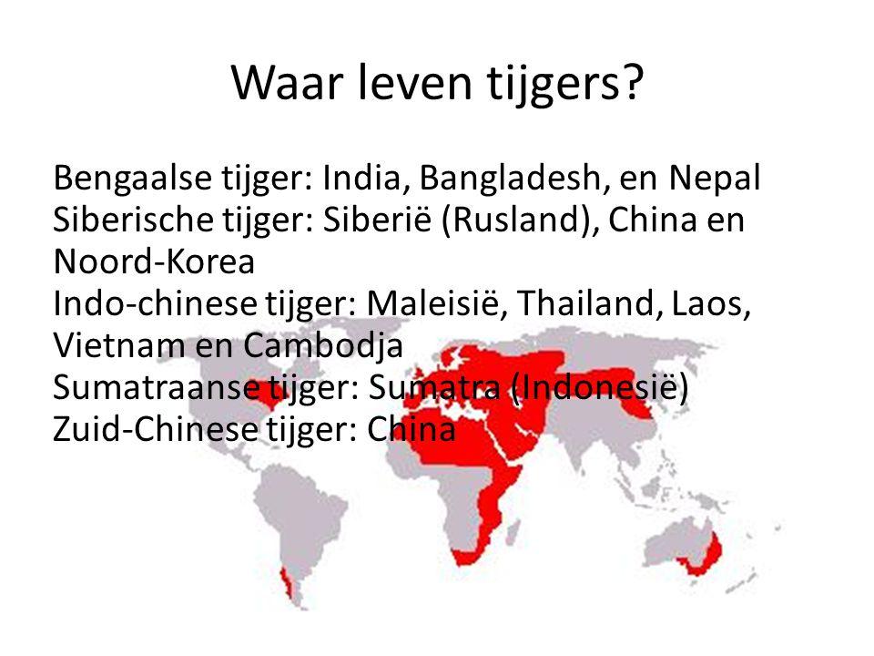 Waar leven tijgers.