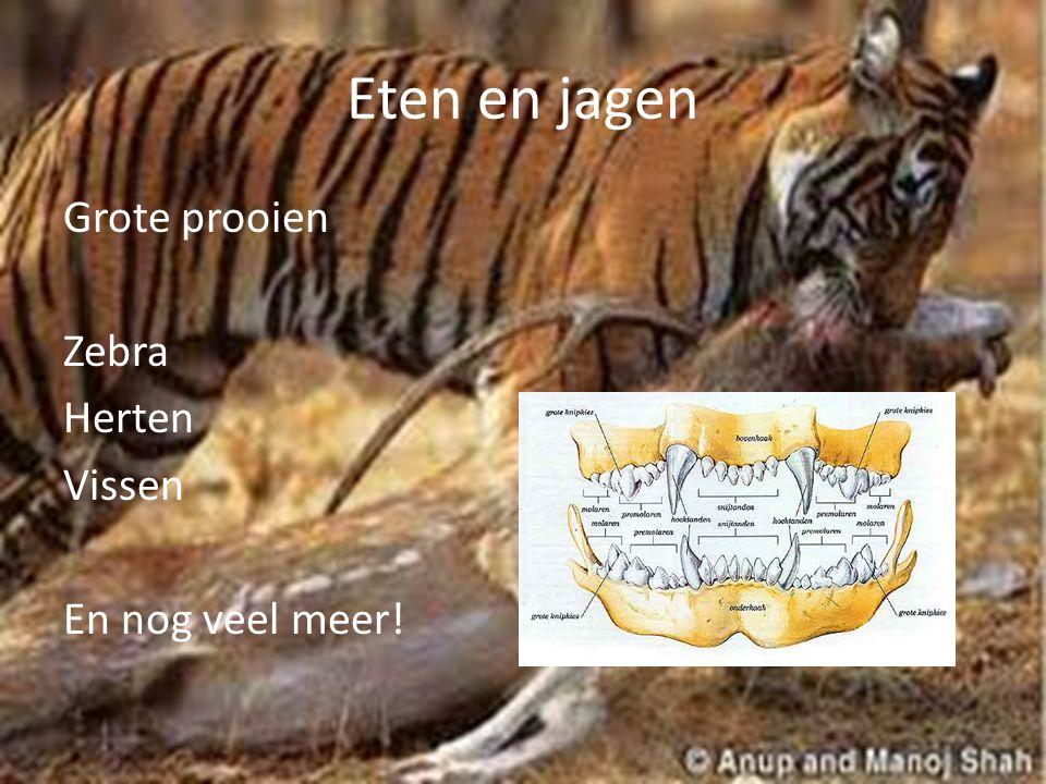 Eten en jagen Grote prooien Zebra Herten Vissen En nog veel meer!