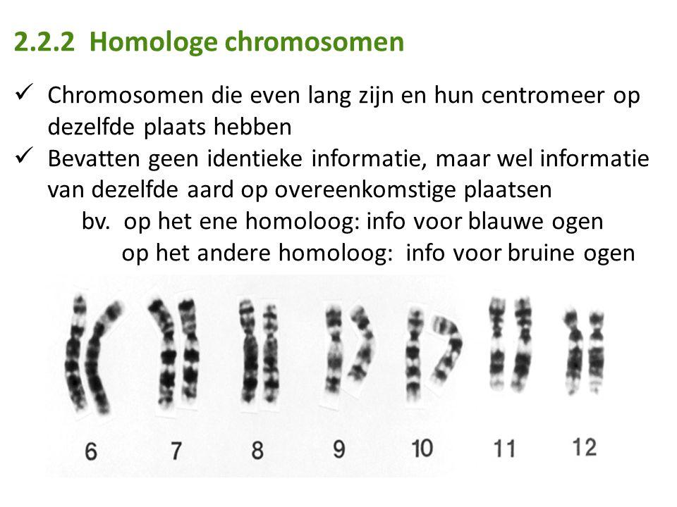 2.2.2 Homologe chromosomen Chromosomen die even lang zijn en hun centromeer op dezelfde plaats hebben Bevatten geen identieke informatie, maar wel informatie van dezelfde aard op overeenkomstige plaatsen bv.