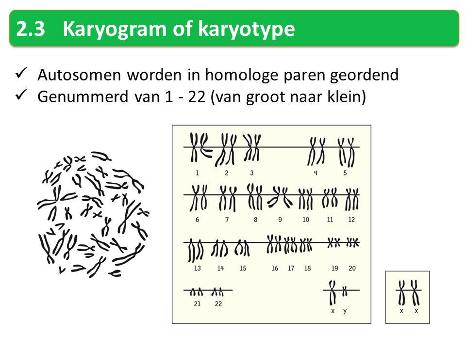 2.3Karyogram of karyotype Autosomen worden in homologe paren geordend Genummerd van 1 - 22 (van groot naar klein)