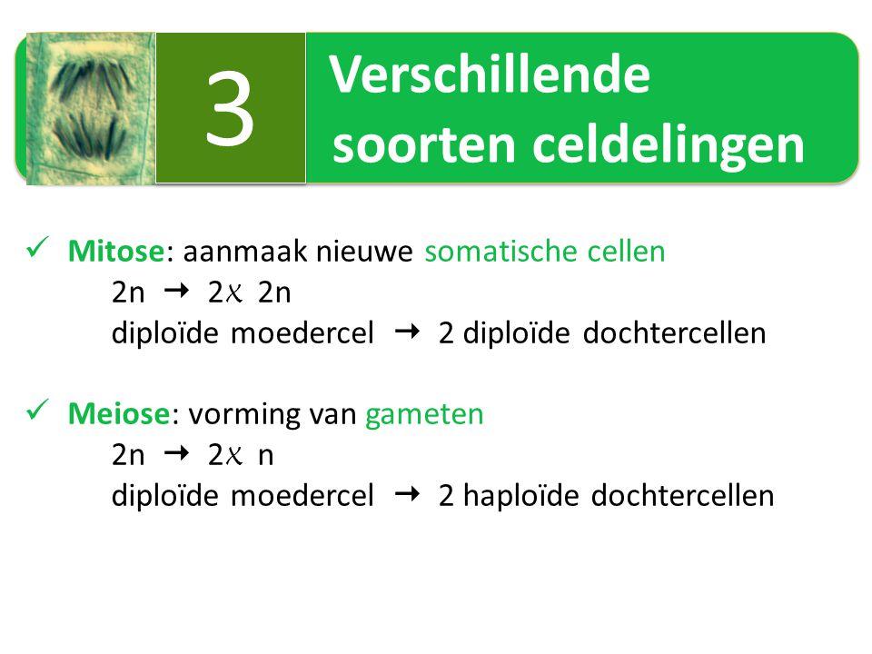 Verschillende soorten celdelingen 3 3 Mitose: aanmaak nieuwe somatische cellen 2n  2 X 2n diploïde moedercel  2 diploïde dochtercellen Meiose: vormi
