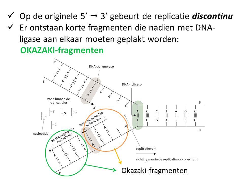 Op de originele 5'  3' gebeurt de replicatie discontinu Er ontstaan korte fragmenten die nadien met DNA- ligase aan elkaar moeten geplakt worden: OKAZAKI-fragmenten Okazaki-fragmenten