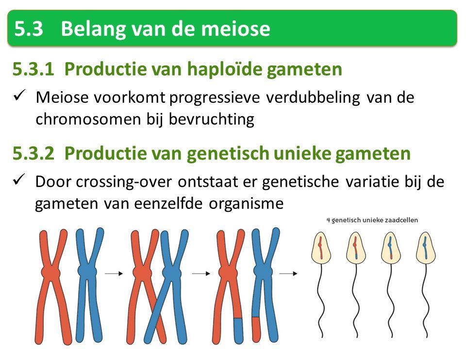 5.3Belang van de meiose 5.3.1 Productie van haploïde gameten Meiose voorkomt progressieve verdubbeling van de chromosomen bij bevruchting 5.3.2 Productie van genetisch unieke gameten Door crossing-over ontstaat er genetische variatie bij de gameten van eenzelfde organisme