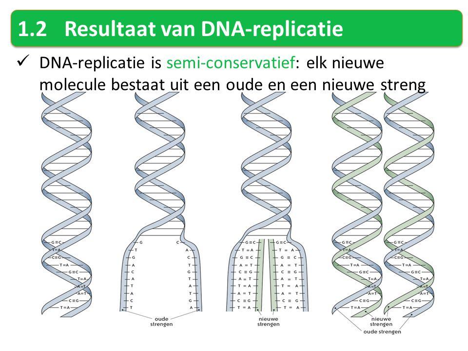 1.2Resultaat van DNA-replicatie DNA-replicatie is semi-conservatief: elk nieuwe molecule bestaat uit een oude en een nieuwe streng