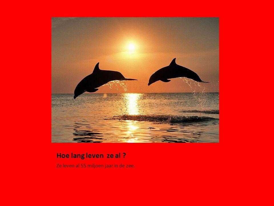 Hoe lang leven ze al ? Ze leven al 55 miljoen jaar in de zee.