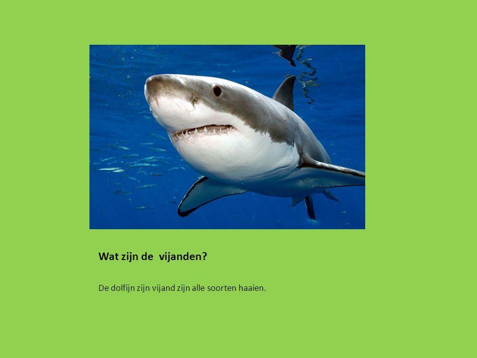 Wat zijn de vijanden? De dolfijn zijn vijand zijn alle soorten haaien.